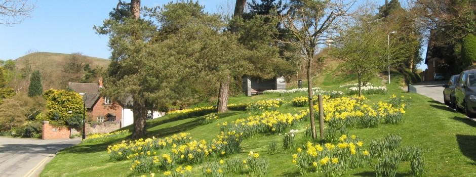 daffodils slide d